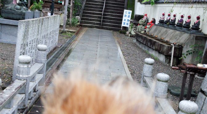犬連れお遍路さん 22番平等寺