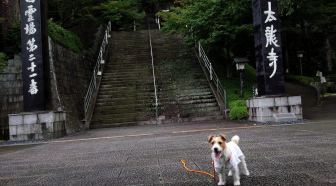 犬連れお遍路さん 21番太龍寺