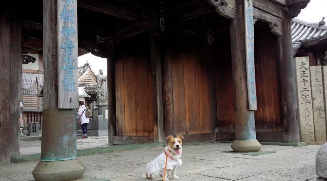 犬連れお遍路さん 16番観音寺