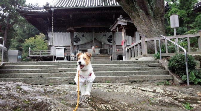 犬連れお遍路さん 14番常楽寺