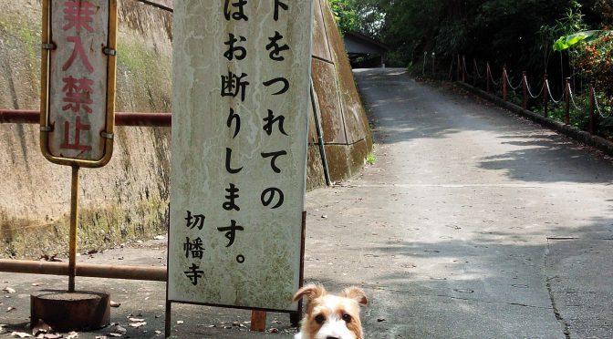 犬連れお遍路さん 10番切幡寺