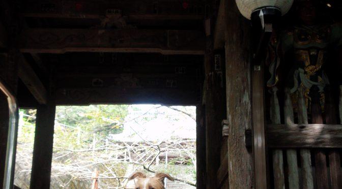 犬連れお遍路さん 8番熊谷寺
