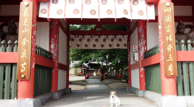 犬連れお遍路さん 3番金泉寺