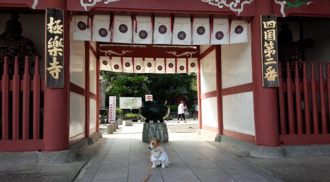 犬連れお遍路さん 2番極楽寺